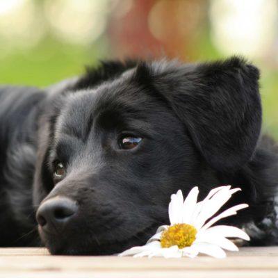 Handgemachte Globuli Bachblüten für Tiere ( Hunde, Katzen) in der Post Apotheke Lüdenscheid in Top Qualität